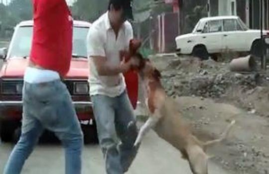 【閲覧注意】人間様よりお犬様のほうが戦闘力は圧倒的に上 ※動画有り
