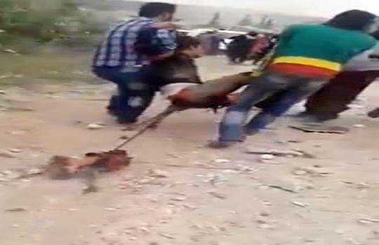 【戦争】シリア爆撃の後が死体散乱の地獄絵図・・・