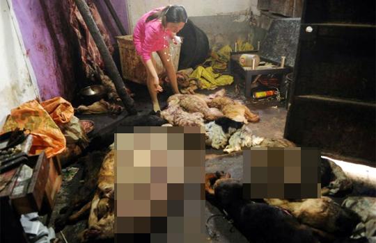 """【閲覧注意】中国、""""秘密の"""" 食肉処理場に潜入した結果・・・"""