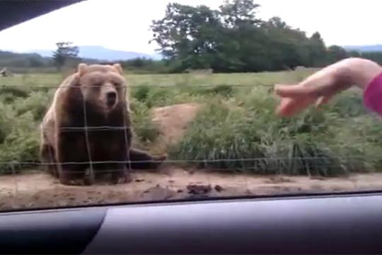 【衝撃!】マジか・・・手を振られた熊の行動・・・