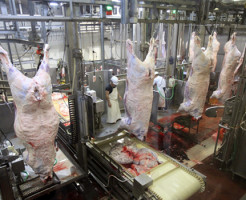 【超閲覧注意】もしも人間が食肉加工機に入ってしまったら・・・ ※グロ動画