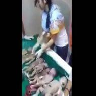 【グロ動画】中国にある死んだ胎児市場に行ってきた ※閲覧注意