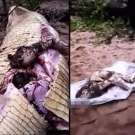 【グロ動画】海外では割りとあるあるなワニに喰われた人を腹から引っ張り出す作業はコチラ