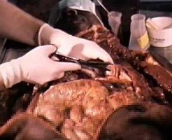 【解剖映像】銃殺された死体を検死解剖してみるけど質問ある?取りあえず全身掻っ捌いてクパァしておくwww ※グロ動画