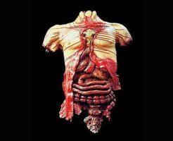【グロ画像】四肢切断は当たり前 内蔵まで取り出され放置されていたバラバラ死体inブラジル
