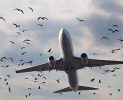 【閲覧注意】鳥の大群に突っ込んでしまった旅客機の末路・・・
