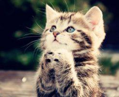 cruel-woman-disembowels-kitten