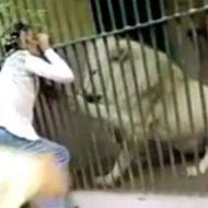 動物園で檻に手を突っ込むとかやっちゃダメでしょwましてやライオンなんて…